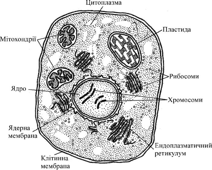 Загальна схема будови клітини